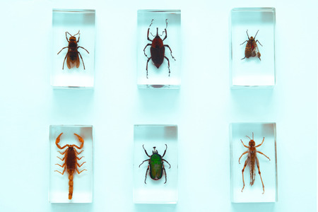Collection of insects, series, fear, phobia, hobby, concept Stock Photo - 1480054