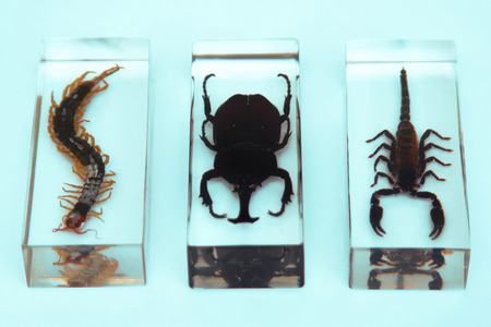 science is exciting: Collection of insects, series, fear, phobia, hobby, concept