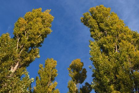 viewpoint: Trees on the blue sky background
