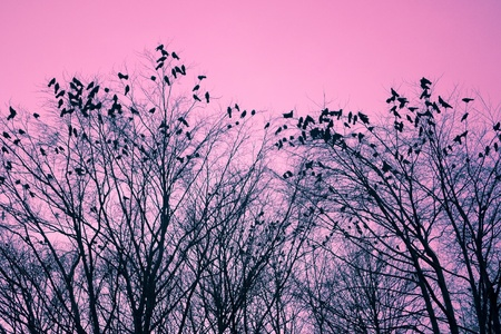 Birds and trees photo