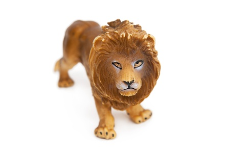 angry lion: Lion Stock Photo