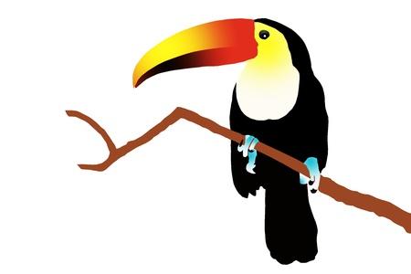 animal limb: Toucan