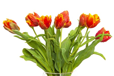 tulips in vase: Tulips Stock Photo