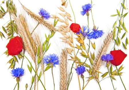 Cornflower: Flowers and cereals Stock Photo