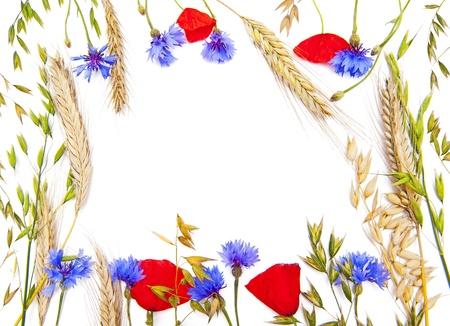 garden cornflowers: Flower frame