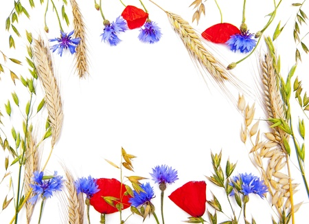 field of corn poppy flowers: Flower frame