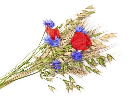 fiordaliso: Bouquet di fiori e cereali