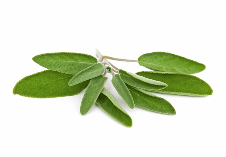 homoeopathic: Sage