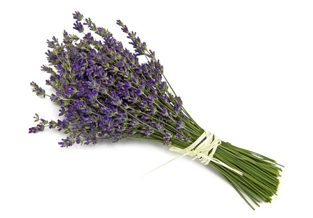 dried herbs: Lavender Stock Photo