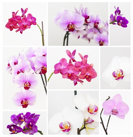Orchid collection photo