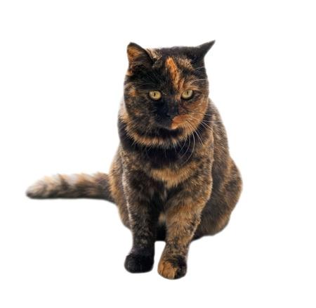 pussy yellow: Cat