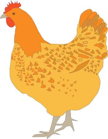 red hen: Hen Vector Illustration