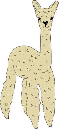 Cute lama alpaca  Vector