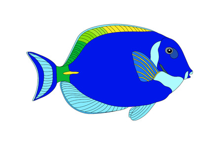 single fin: Fish Illustration