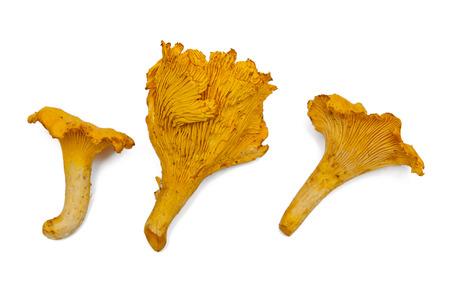 살구 버섯
