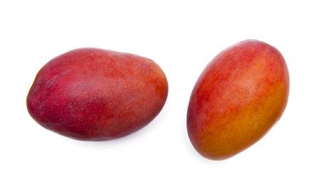citrus tree: mango