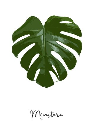 Decorative monstera leaf isolated on white background poster vector illustration Vektorové ilustrace