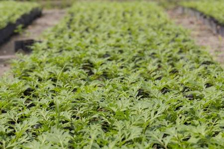 Plant nursery in a seeding bag prepared for gardening Stock Photo - 20146939