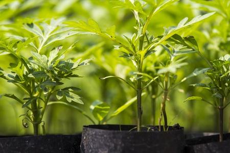 seeding: Plant nursery in a seeding bag prepared for gardening