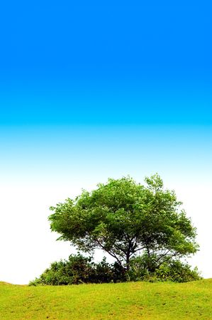 thickets: The tree with the blue sky background