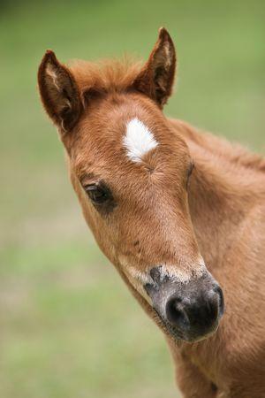 caput: the horse in the farm.