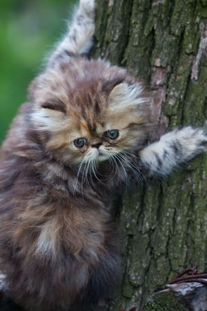 the kitten play at the outdoor. photo