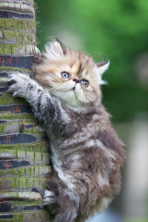 the kitten play at the outdoor. Stock Photo - 5237381