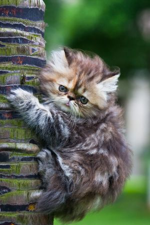 the kitten play at the outdoor. Stock Photo - 5237382