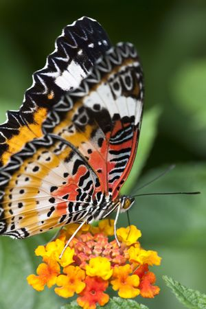 the butterfly fall on the flower in a garden outdoor. Stock Photo - 5706999