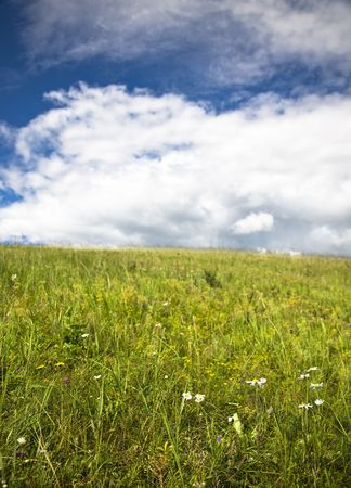 the scene of the meadow. Stock Photo - 6009940
