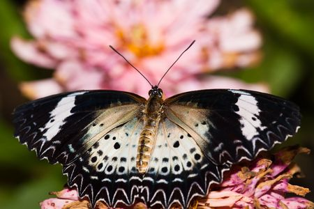 the butterfly fall on the flower in a garden outdoor. Stock Photo - 5928982