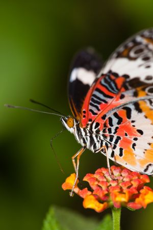the butterfly fall on the flower in a garden outdoor. Stock Photo - 5928911