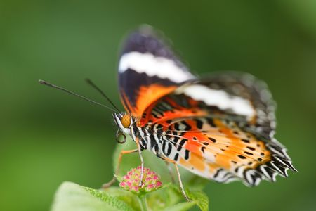 the butterfly fall on the flower in a garden outdoor. Stock Photo - 5928908