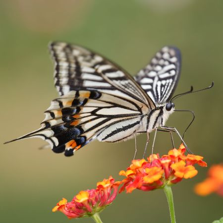 the butterfly fall on the flower in a garden outdoor. Stock Photo - 5928910