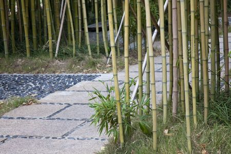 the footpath with the bamboo background in a uptown in china. photo
