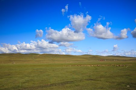 the scene of the meadow. Stock Photo - 6087908