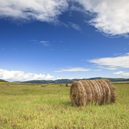 the scene of the meadow Inner Mongolia . photo
