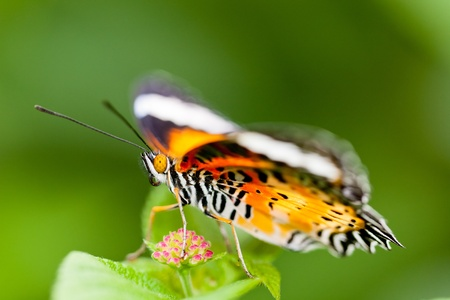 the butterfly fall on the flower in a garden outdoor. Stock Photo - 15061576