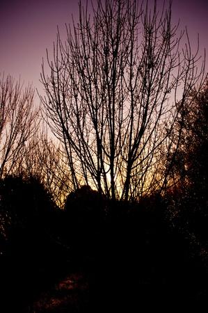 backlighting: BACKLIGHTING TREE
