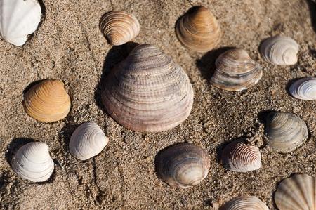 image of  seashells on beach  photo