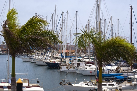 marina port in las palmas Canarias  spain  photo