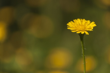 yeloow: yeloow flower isolated on greean background Stock Photo