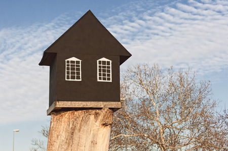 vibrant cottage: small black house on a big root