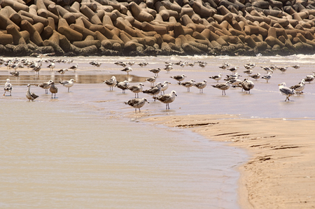 water fowl: Seagulls stand on the beach