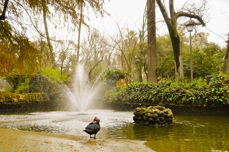 public park in seville city