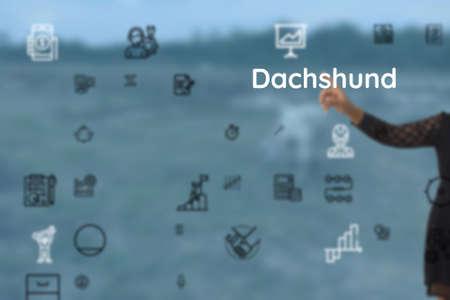 introduced to Dachshund, hedgehog, fido, ladybug, doggie, fox, ickle, pomeranian, disguise, cairn terrier