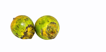 areca on isolated white background with clipping path Banco de Imagens