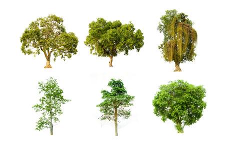 Sammlung von Einzelbildern des grünen Baumes. Große Staude auf weißem Hintergrund.