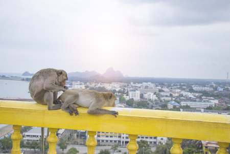 Two young monkeys sit together to find lice and ticks. On the walls around the temple on the Mountain
