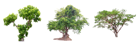 Collection of isolate pictures of green tree. Large perennial on white background.